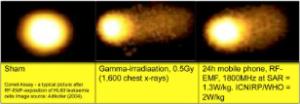 """Αριστερά ένα υγιές κύτταρο. Στο κέντρο ένα κύτταρο που έχει δεχθεί ακτινοβολία Γάμμα και δεξιά ένα κύτταρο που έχει δεχθεί για 24 ώρες ακτινοβολία μικροκυμάτων, όπως αυτή που εκπέμπουν οι """"έξυπνοι"""" μετρητές."""